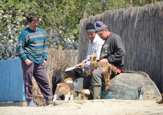 chèvre nourrie à la main à Mila 23