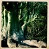 » Mon cher Baobab»