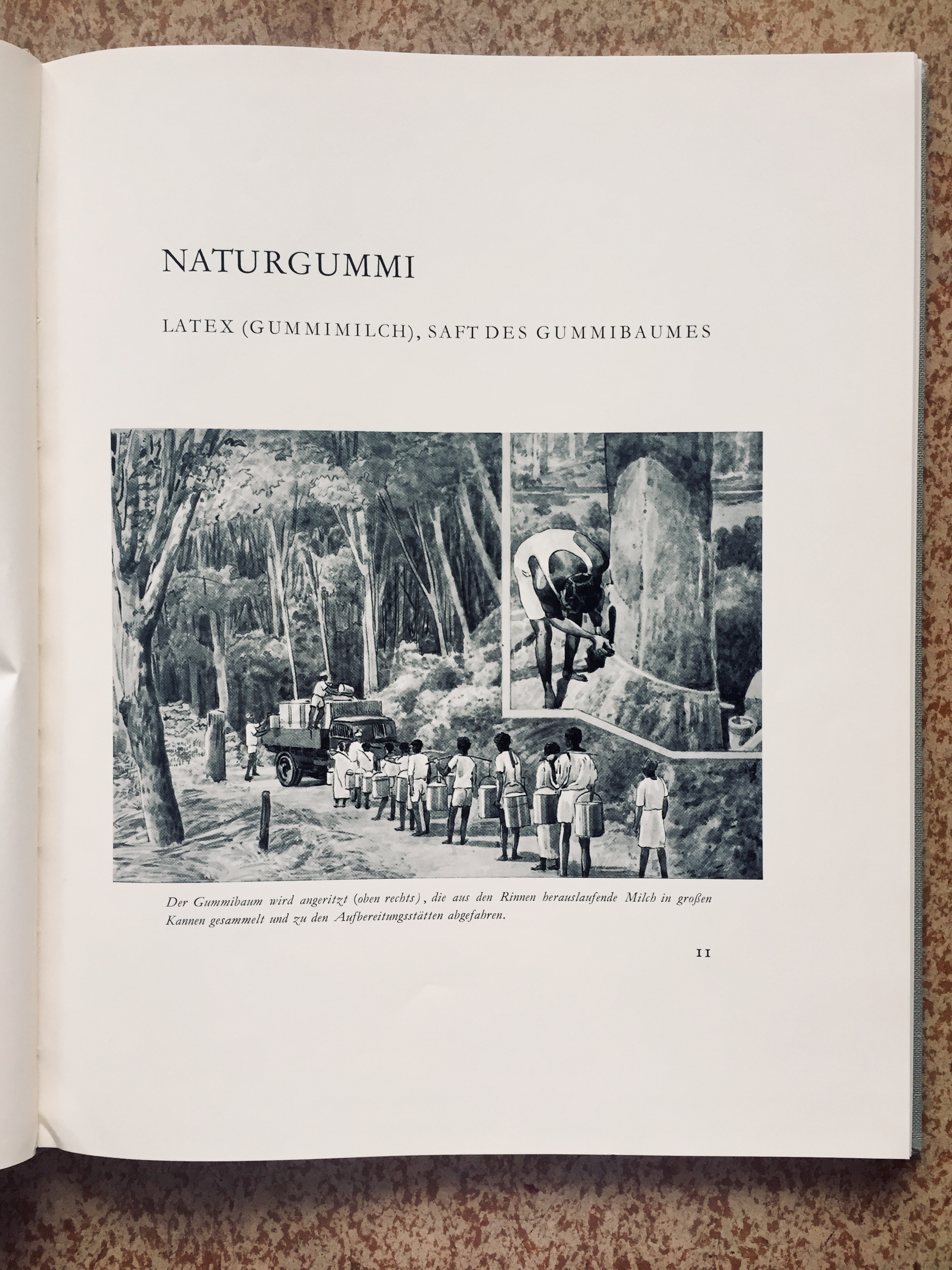 Festschrift illustration of workers on a rubber plantation, 1957