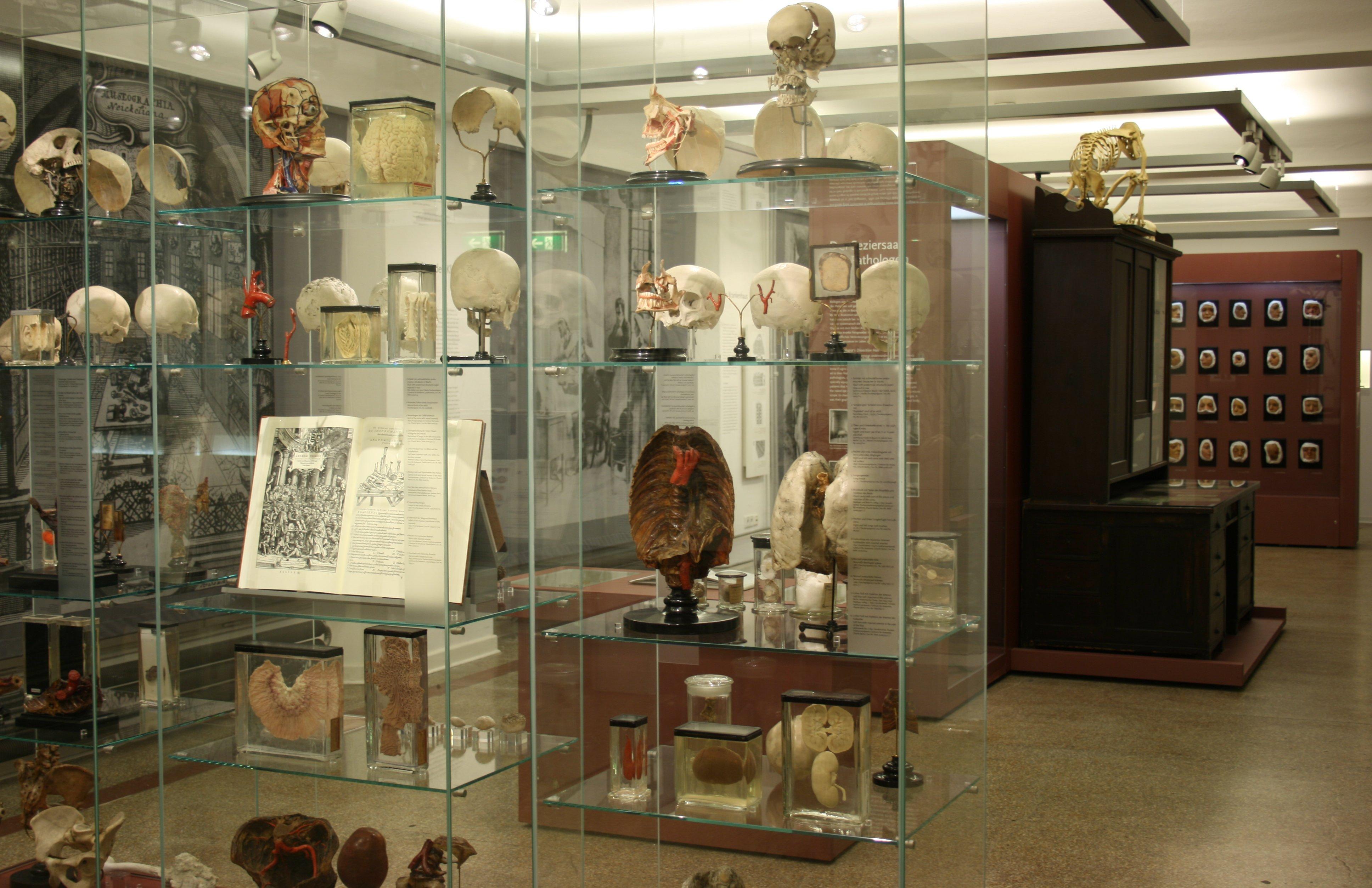 Charite Museum öffnungszeiten