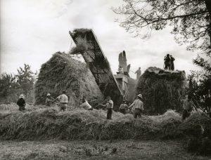 Dépiquage au Mousse dans le Gers, 1946. CC www.histoire-immigration.fr Jean Dieuzaide
