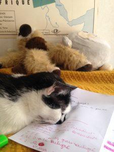 Quand le sommeil arrive, les chats tombent. Tous droits réservés, Julia James.