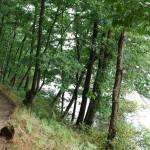 Le bois d'Isigny (Isigny-le-Buat, 50), Août 2013. Cliché 110B