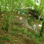 Bois alluvial du Livet (Saint-Laurent-de-Terregatte, 50), Août 2013. Cliché 164B