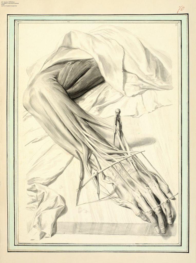 Appel à communication : Das Anatomische Zeichnen | GRHAM
