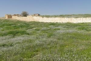 Tel Arad - Blumen in der Wüste (Foto: Thomas Hieke)