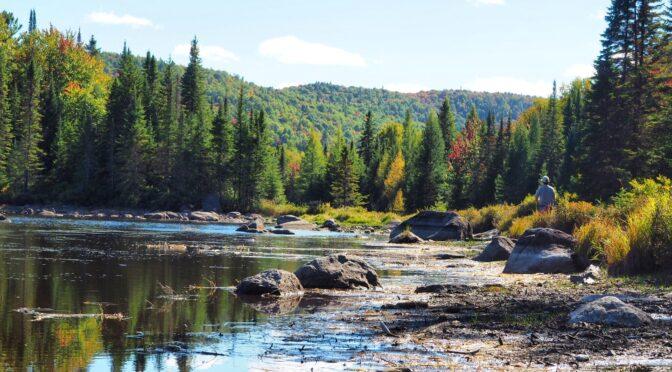 Appel à contributions : Les mondes de la forêt et du bois à l'épreuve des changements globaux