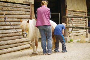Vorbereiten der Pferde2