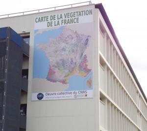 carte de vegetation