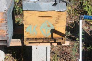 abeilles-1