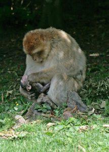 monkey-456094_1280
