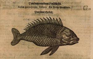 Gessner, Frankfurt 1670