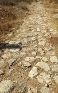 Photographie de la voie menant de Jifna à Antipatris. Photographie : Margaux Thuillier.