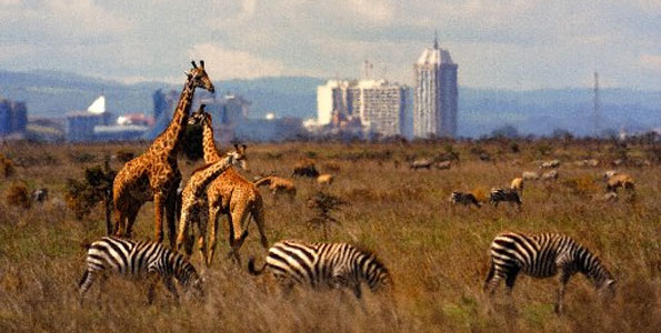 Nairobi National Park: Learning Partnership for an Urban Protected Area – Mambo !