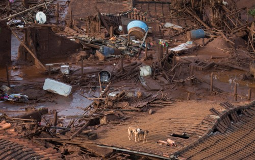Two dogs stand on the roof of a destroyed house at the small town of Bento Rodrigues after a dam burst on Thursday, in Minas Gerais state, Brazil, Friday, Nov. 6, 2015. Brazilian rescuers searched feverishly Friday for possible survivors after two dams burst at an iron ore mine in a southeastern mountainous area.  (AP Photo/Felipe Dana)