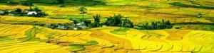 rice-terraces-214725-001