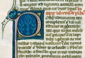 Barthélémy l'Anglais, De Proprietatibus rerum, Autun, BM, ms. 32, f. 196v