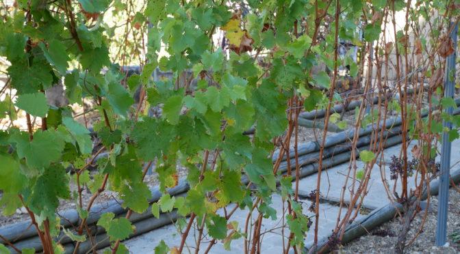 Projet «Histoires de vies, de vignes et de vins» – 1er déplacement à Sancerre !