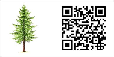 Neben einem QR-Code ist der dazugehörige Baum, in diesem Falle eine Fichte, skizziert.