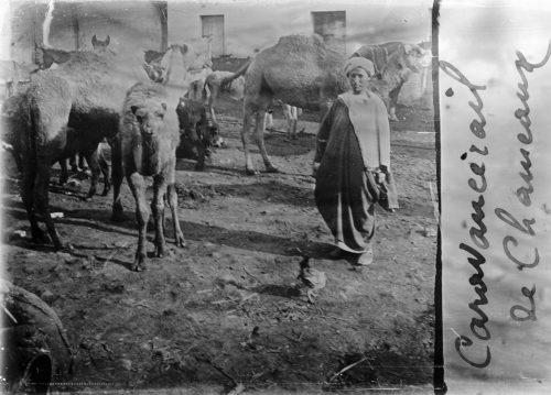 Caravansérail de chameaux (1)