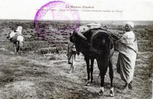 Aux avant-postes - cadavre marocain ramené au camp