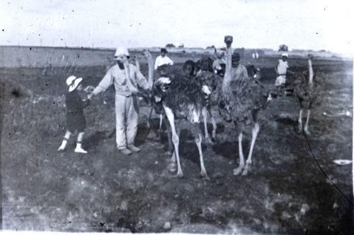 Elevage Autruches 1914-1918