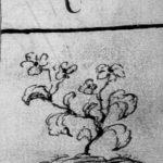 Un germe, fin de table annuelle de 1764, paroisse Sainte-Croix.