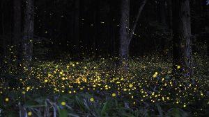 lucciole-nel-bosco