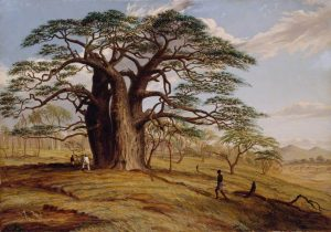 Baines, Thomas; A Baobab near the Bank of the Lue; Collection of the Herbarium, Library, Art & Archives, Royal Botanic Gardens, Kew; http://www.artuk.org/artworks/a-baobab-near-the-bank-of-the-lue-87567