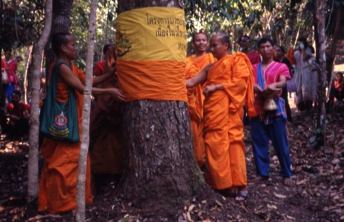 Tree ordination ritual (buat pa) -Chiang Mai province