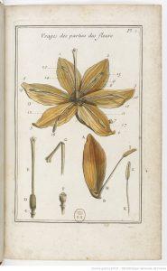 elemens_de_botanique2