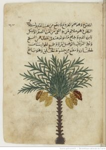 ibn-fadl-allah-al-umari-an-nakhl-illustration