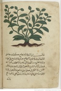 ibn-fadl-allah-al-umari-illustartion-al-3ashr-cite-ibn-baytar