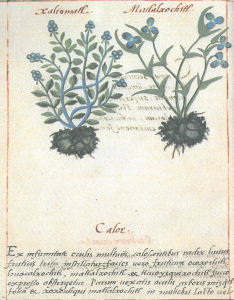 page-codex-badianus1