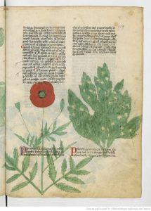 page-du-liber-de-plantis1