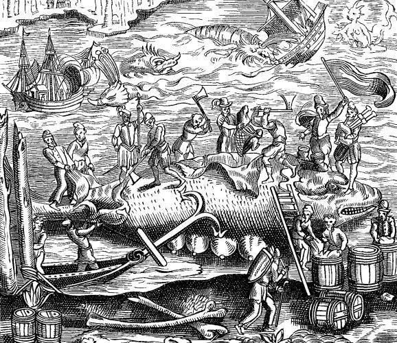 Chasse à la baleine, dans André Thevet, Cosmographie universelle, 1574.