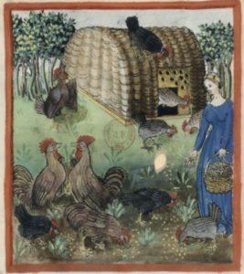 Femme nourrissant la volaille