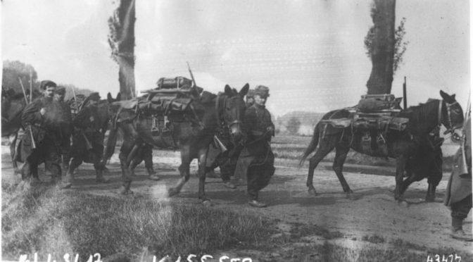Les animaux dans la Grande Guerre  – Partie I, Les « animaux de guerre » vus par leurs contemporains français