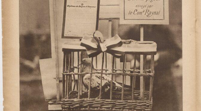 Les animaux dans la Grande Guerre – Partie III, Les « bêtes des tranchées », de la reconnaissance à la mémoire