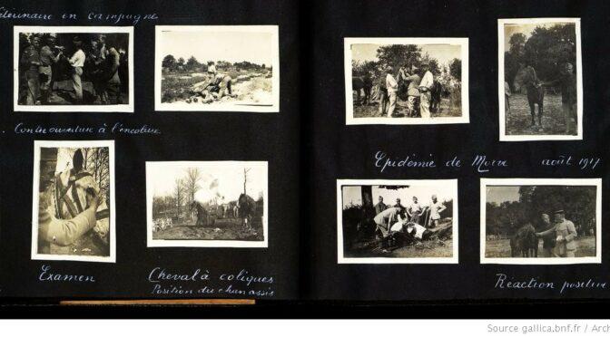 Les Animaux dans la Grande Guerre – Partie IV,  «Trésors d'archives » et mémoire vive  sur le web