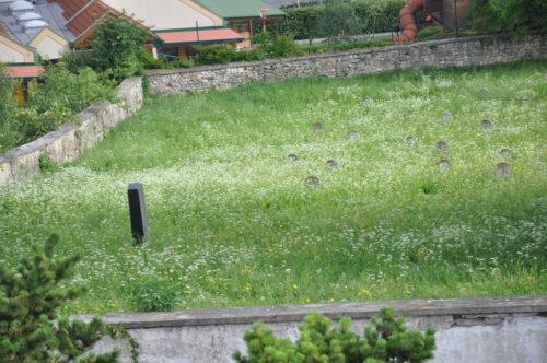 25/2018 - Jüdischer Friedhof Mattersburg