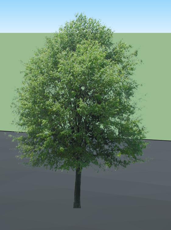 https://f-origin.hypotheses.org/wp-content/blogs.dir/3847/files/2017/05/tree-1.png