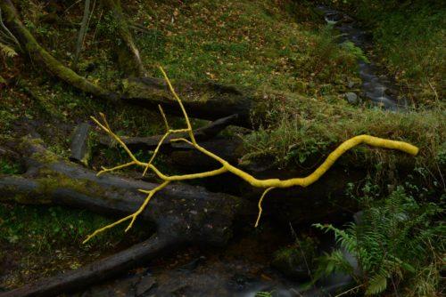 Filmstill mit einem gelben Ast vor einem moosbewachsenen Baumstamm