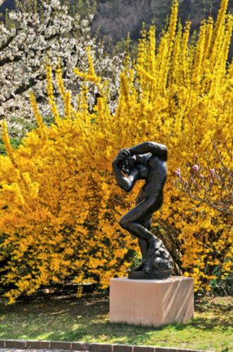 Das Bild zeigt die Skulptur eines menschlichen Körpers auf einem Sockel, welches vor einem blühenden, gelben Busch steht.