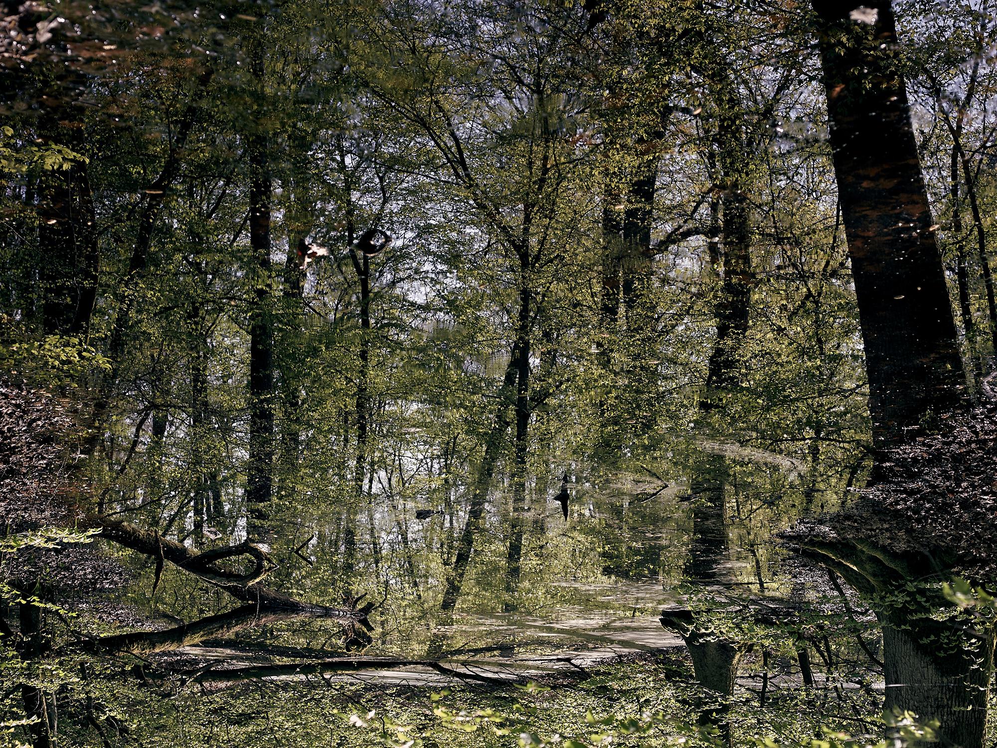 Die Fotografie zeigt eine Waldaufnahme, mit hellgrünen Tönen und dunklen Baumstämmen an den Seiten.