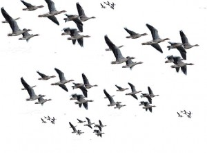 Mardis de Confluences 2012-2013: les saisons des migrations