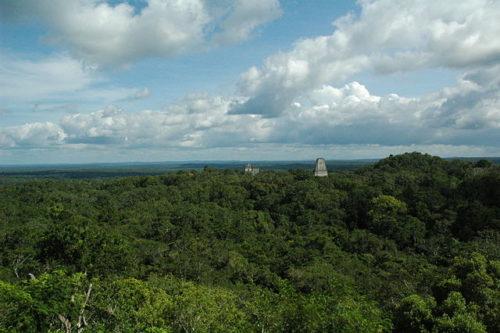 Vue du site de Tikal