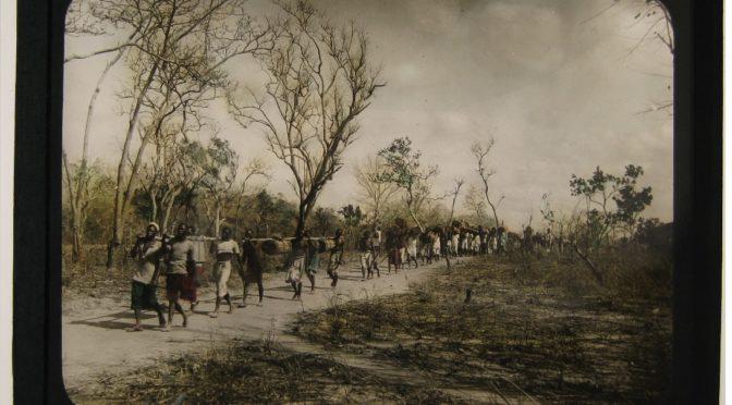 1909 (ca.): Abtransport von Dinosaurierknochen aus der damaligen Kolonie Deutsch-Ostafrika