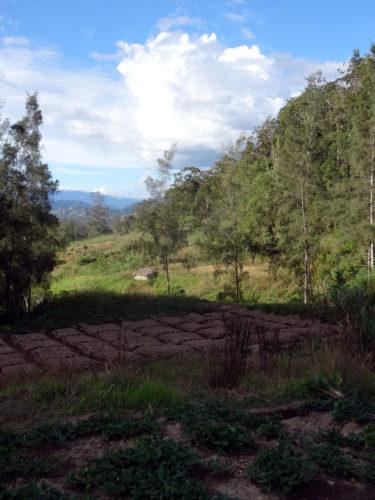 Gardens in the Wurup valley near Manim.