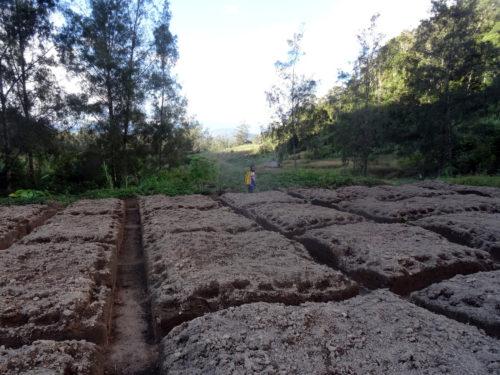 Preparing gardens in Manim village to plant taro and sweet potatoes.